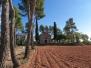 CASTELLNOU DE BAGES, Sant Salvador de Torre Abadal, S-XII